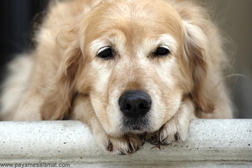علائم، علل و درمان آنافیلاکسی در سگ ها