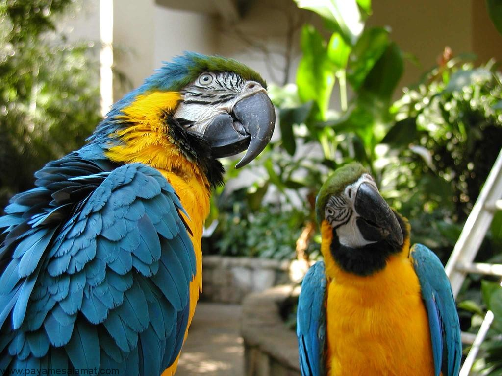 نشانه ها، علل، تشخیص و درمان اختلال هورمونی در پرندگان