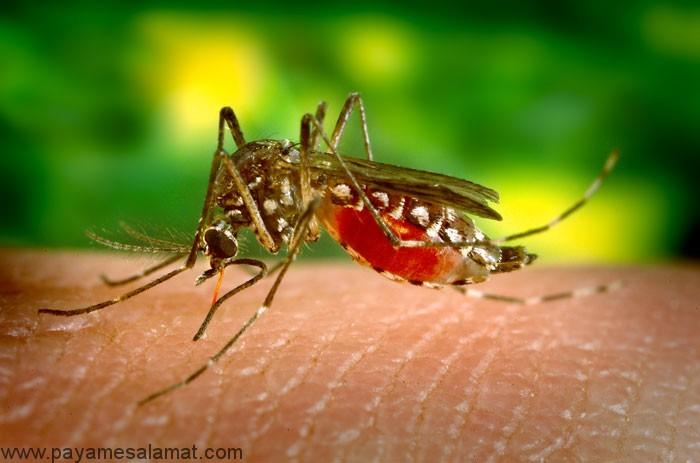 درمان، نشانه ها و علل ابتلا به تب زرد