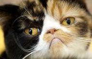 مسمومیت با ایبوپروفن در گربه ها از علل تا روش های درمان