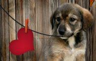 انفارکتوس میوکارد در سگ ها ؛ نشانه ها، علل، تشخیص و روش های درمان