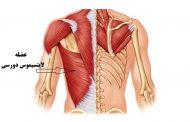 درد وسط کمر (درد لایتسیموس دورسی) ؛ علل و درمان های موثر خانگی