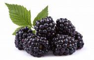 خواص تمشک برای بدن و ارزش غذایی این میوه خوشمزه