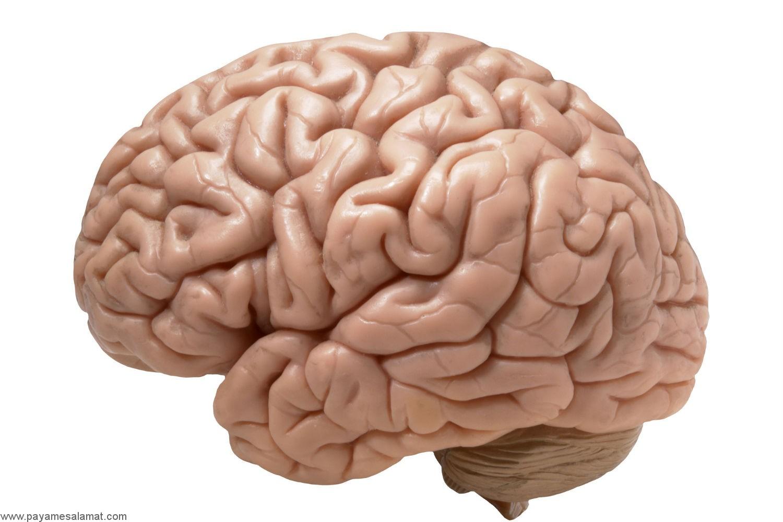 علائم آتروفی مغز (کوچک شدن مغز) چیست؟