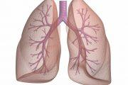 آشنایی با عملکرد ریه در بدن و نحوه کارکرد سیستم تنفسی
