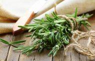 خواص رزماری برای بدن و کاربرد این گیاه برای درمان بیماری ها و مشکلات مختلف