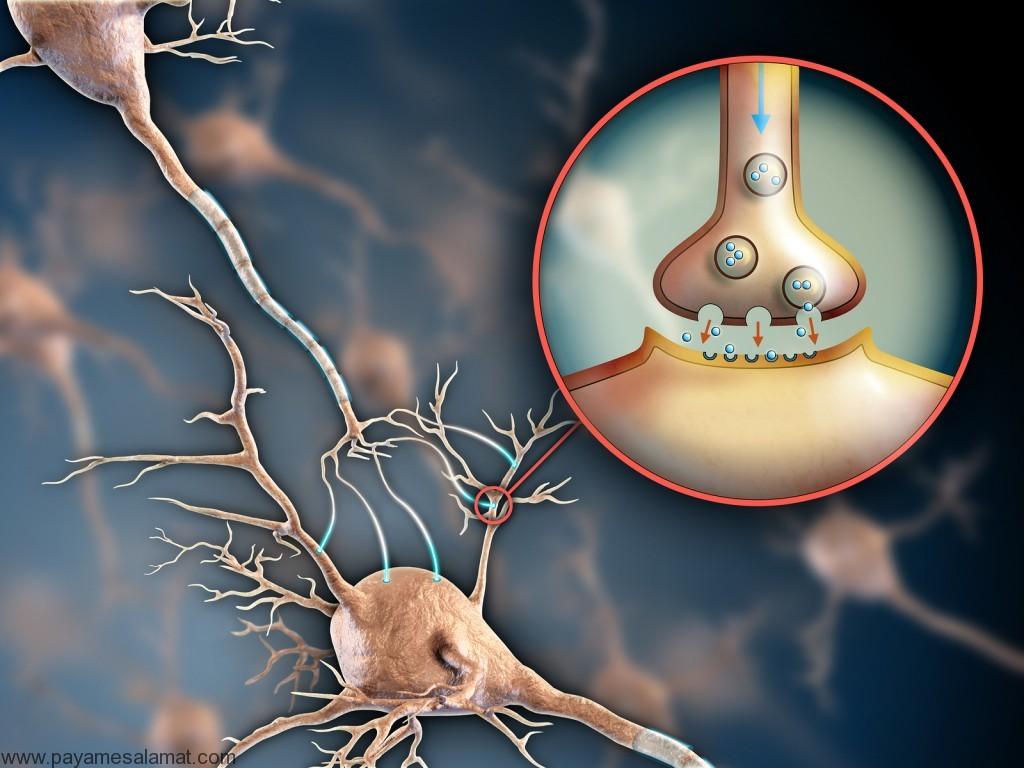 روش های تقویت سیستم عصبی به کمک چند دستور ساده و کاربردی