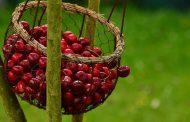آیا افراد مبتلا به دیابت می توانند گیلاس بخورند؟