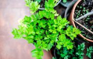 معرفی ۱۰ گیاه دارویی که می توانید در خانه آن ها را پرورش دهید