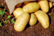 راهنمای حذف نشاسته سیب زمینی یا چگونه نشاسته سیب زمینی را بگیریم