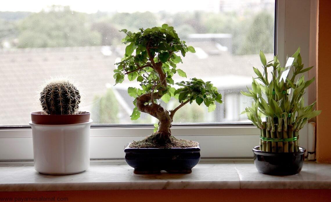 گیاهانی که انرژی مثبت ایجاد می کنند را بیشتر بشناسید