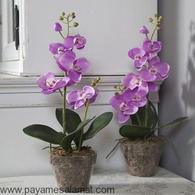 گیاهانی که انرژی مثبت ایجاد می کنند