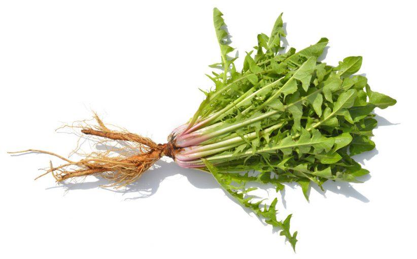 خواص ریشه قاصدک برای بدن و چگونگی استفاده از این ماده برای درمان مشکلات