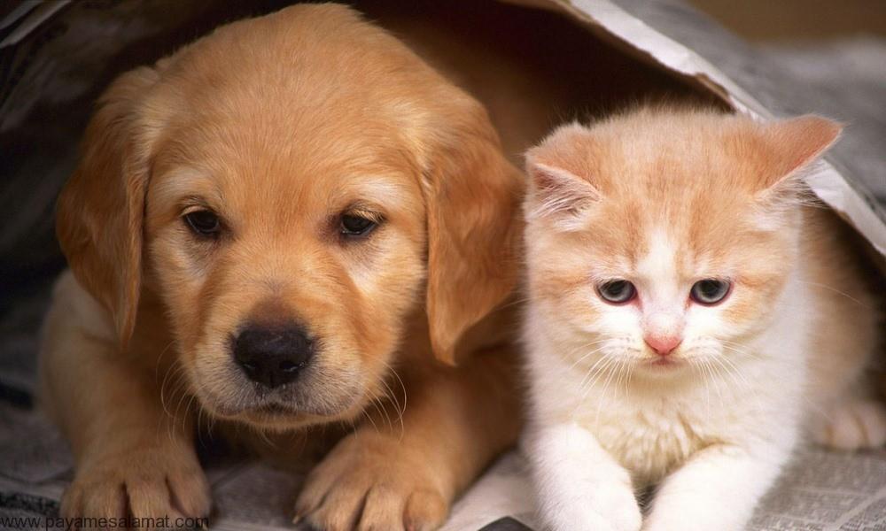 از بین بردن کک بدن سگ و گربه به روش های طبیعی و خانگی