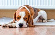 معرفی چند راه طبیعی برای درمان اسهال در سگ ها