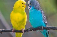 بیماری ذخیره سازی آهن در پرندگان ؛ علائم، علل و روش های پیشگیری