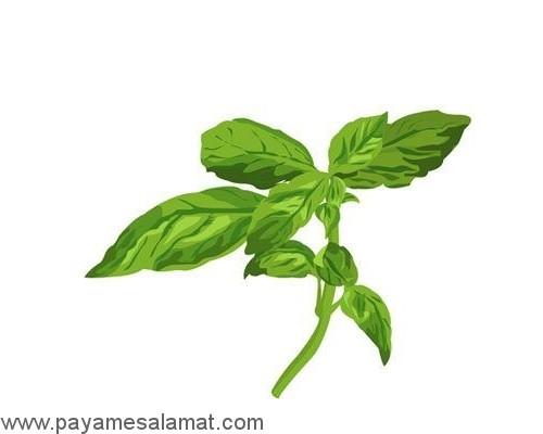 گیاهانی که سلامت بدن را بهبود می بخشند