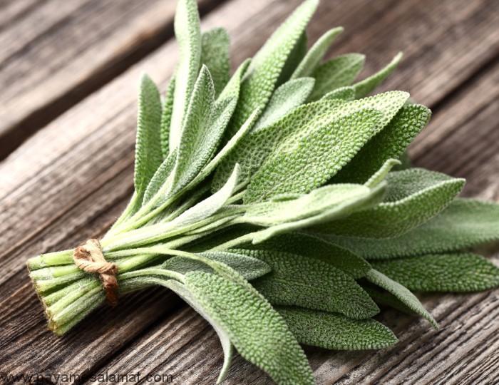 ادویه جات و گیاهان دارای خواص درمانی
