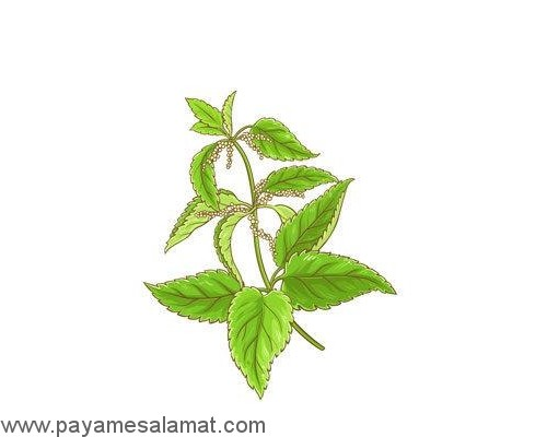 گیاهانی که از بدن سم زدایی می کنند
