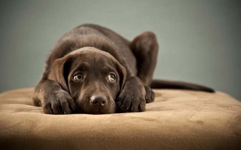 روش هایی که به کمک آن ها می توانید استرس در سگ ها را کمتر کنید