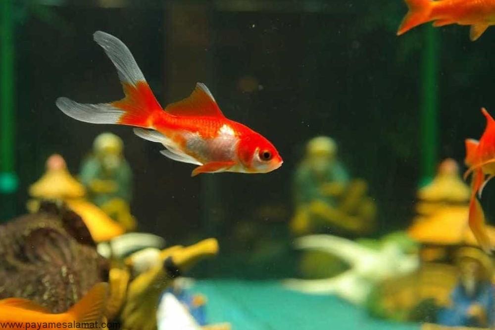 کم خونی در ماهی ها از علل تا روش های درمان آن