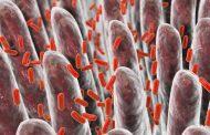 راه های بهبود باکتری های روده مبتنی بر تحقیقات علمی