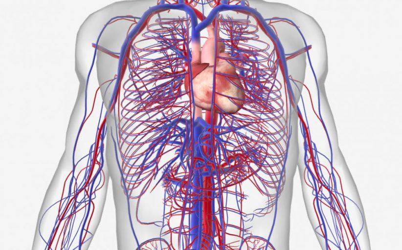معرفی مهمترین بیماری های سیستم گردش خون
