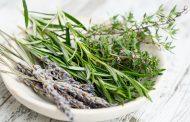 گیاهان مفید برای جلوگیری از ریزش مو
