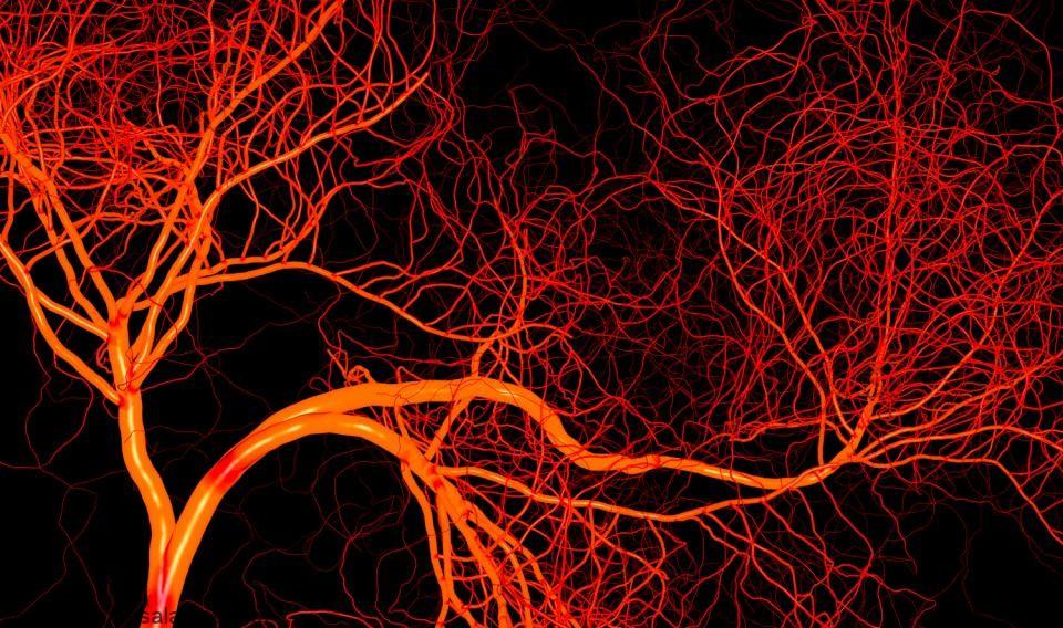 راه های ساده و مفید برای افزایش اکسید نیتریک در خون