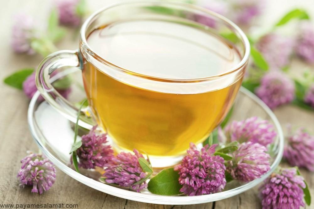 خواص علمی اثبات شده شبدر قرمز برای بدن و مزایای نوشیدن چای این گیاه