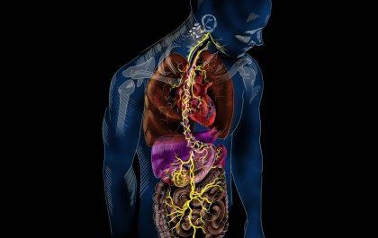 عملکرد عصب واگ در بدن