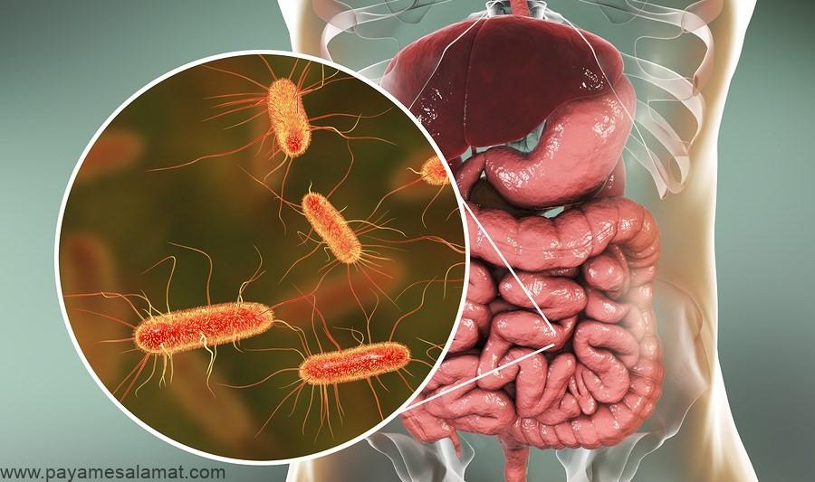 بهبود باکتری های روده