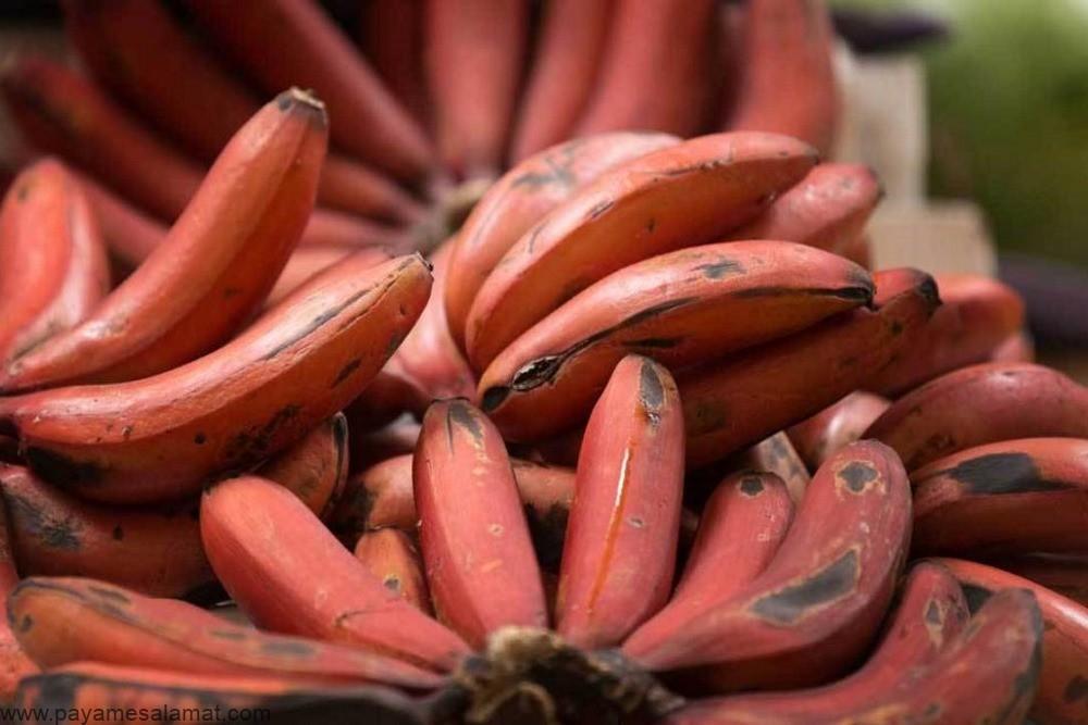خواص و ارزش غذایی موز قرمز و مقایسه آن با موز زرد