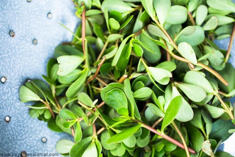خرفه (Portulaca Oleracea) گیاهی پر از خاصیت
