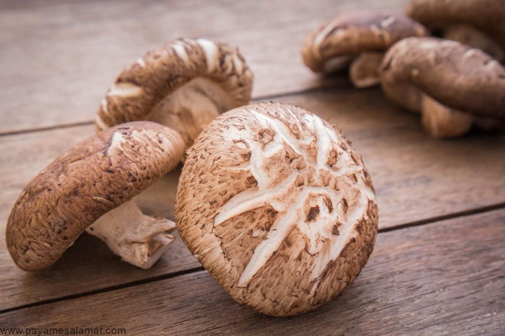 قارچ شیتاکی ؛ مزایای علمی و اثبات شده و ارزش غذایی این قارچ خوراکی