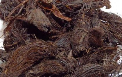 خواص ریشه سنبل الطیب