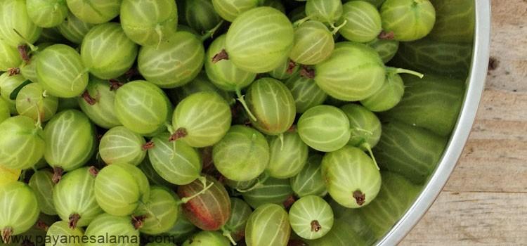 خواص انگور فرنگی (گالش انگور) برای بدن