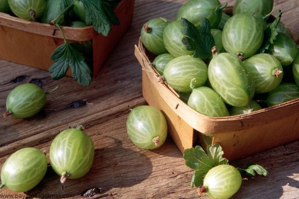 خواص انگور فرنگی (گالش انگور) برای بدن و ارزش غذایی این ماده
