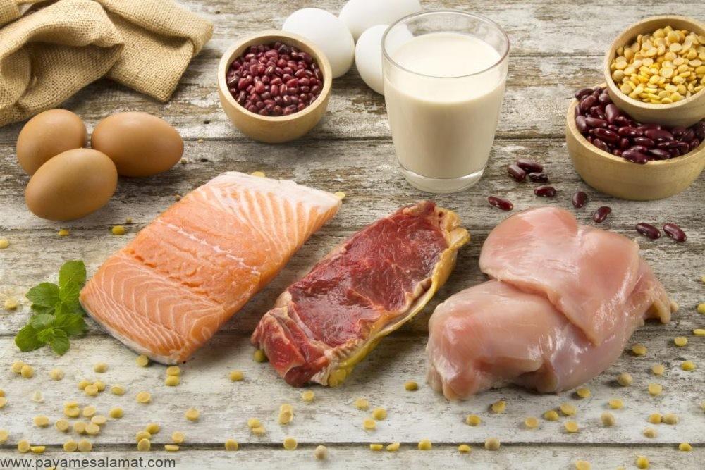 تفاوت پروتئین حیوانی و پروتئین گیاهی در چیست؟