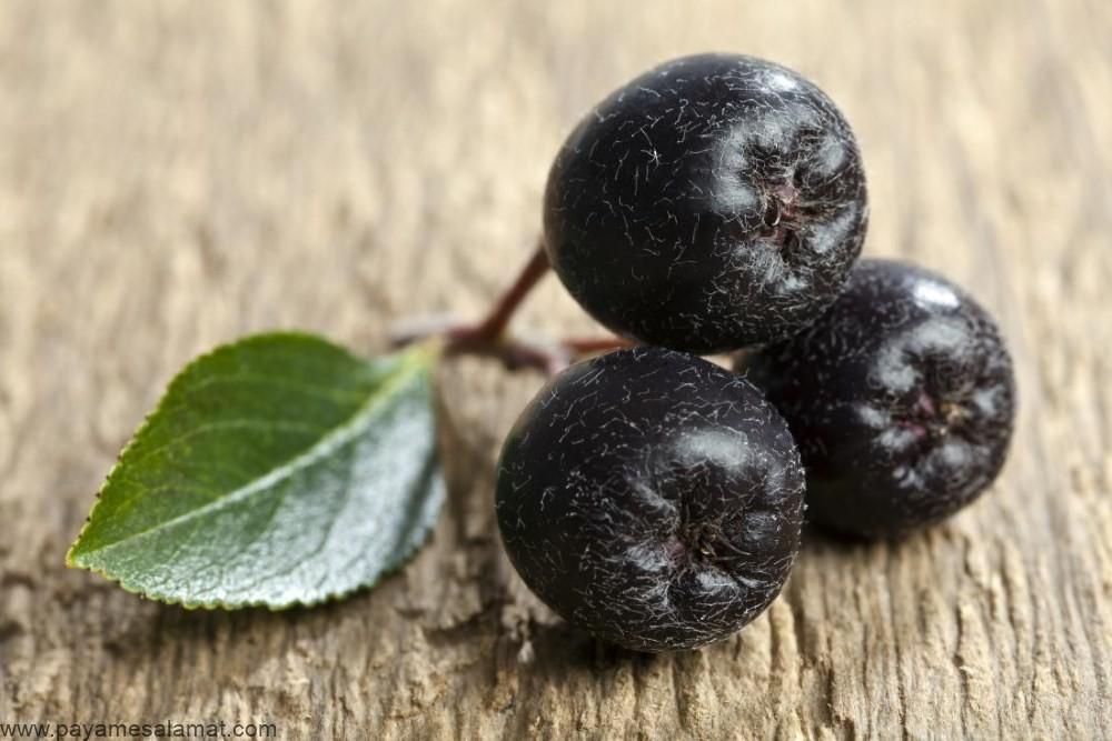توت آرونیا و هر آنچه که نیاز است در مورد این میوه بدانید