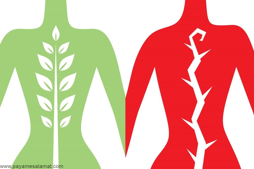 رژیم غذایی مفید برای جلوگیری از دیسک کمر و کاهش درد این ناحیه از بدن