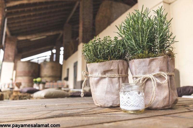 گیاهان ضد ویروسی