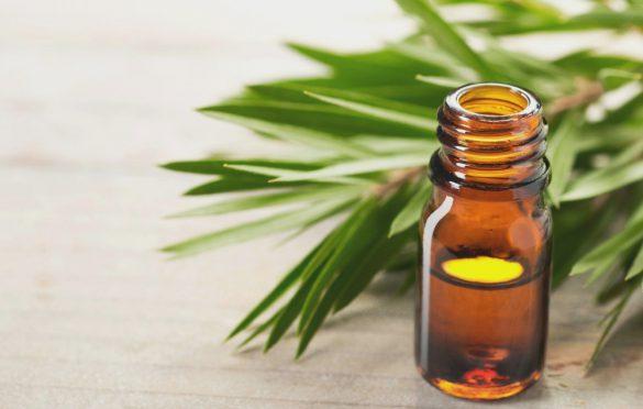 کاربرد روغن درخت چای برای درمان جوش و آکنه