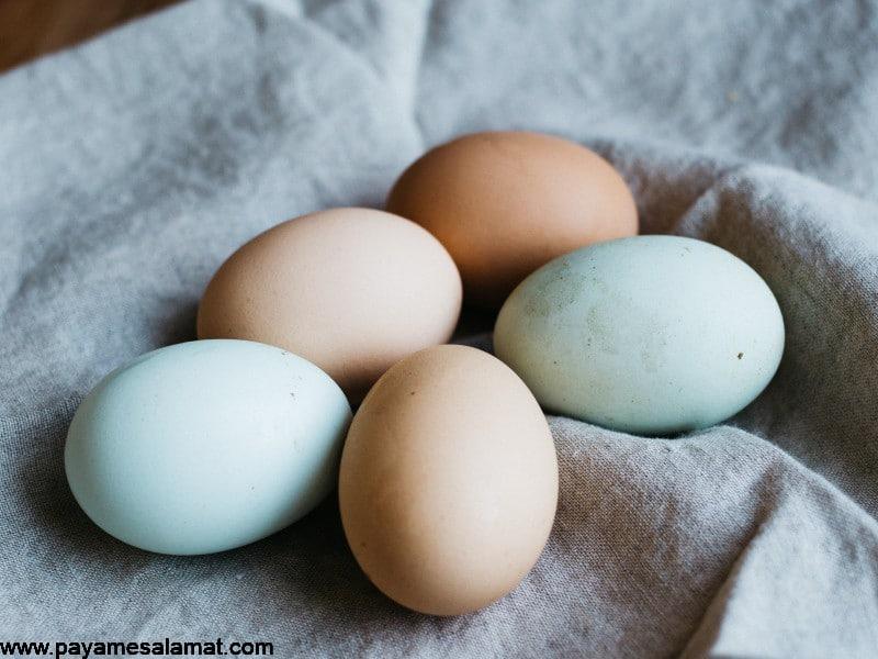 تفاوت تخم مرغ قهوه ای و تخم مرغ سفید