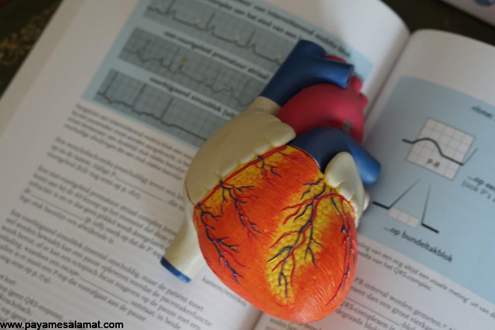 تروپونین و نحوه متعادل کردن این پروتئین در بدن