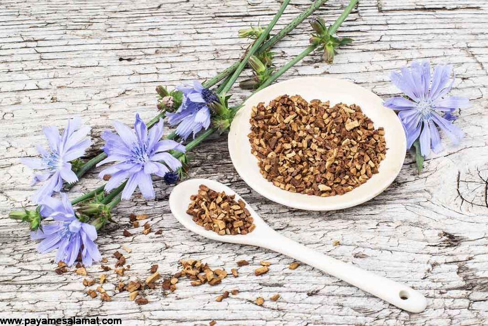 خواص ریشه کاسنی ؛ جایگزینی برای قهوه که از فیبر غنی شده است