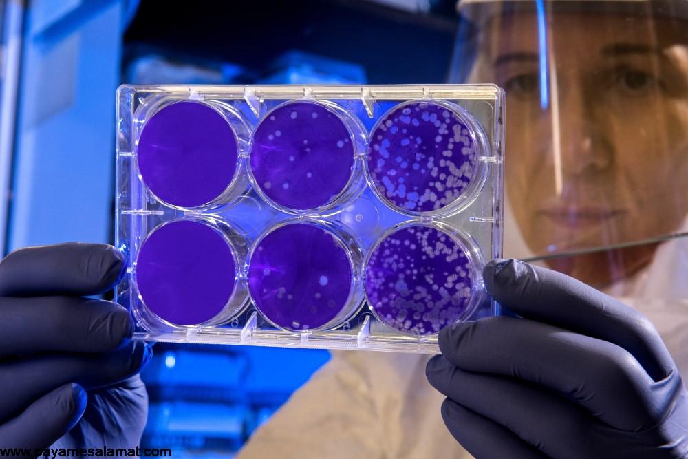 ویروس کرونا ؛ انواع، علائم، روش های تشخیص و روش های درمان آلودگی با این ویروس
