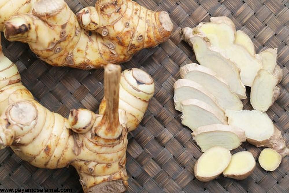 گیاه خسرودار یا همان ریشه گالانگال ؛ بهترین گیاه برای مبارزه با سرطان